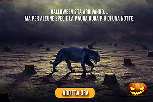 halloween, campagna