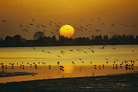 Tramonto sull' East Dongting Lake, Ramsar wetland's site, Yueyang City, Hunan Province, China. WWF ... rel=