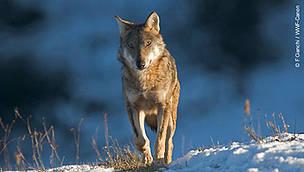 © F. Cianchi/WWF Canon
